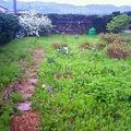 リガーデンで除草対策画像4