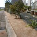 草の生えない土の庭画像4