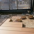屋上庭園施工事例画像4