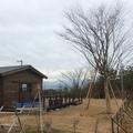 大木の移植画像2
