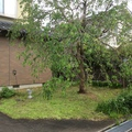 除草対策で2種類のスタンプコンクリート画像4