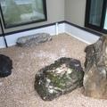 庭石と沓脱石画像4