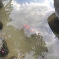 池の水漏れ補修画像2