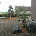 和風の植栽です画像2