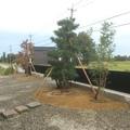 和風の植栽です画像4
