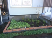 お店の花壇をリニューアル