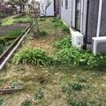 人工芝のドックラン画像4